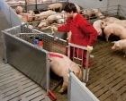 Electronic Sow Feeder(ESF)